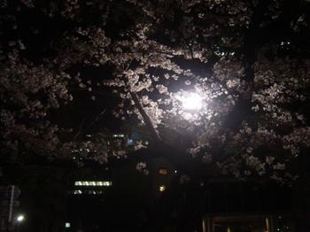 22_夜桜.JPG
