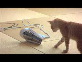 ドライヤーとネコ.jpg