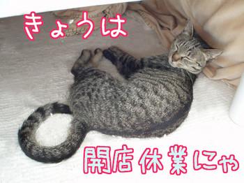 開店猫.jpg