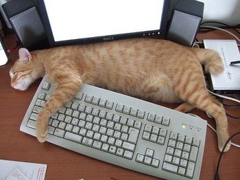 s-cat.jpg